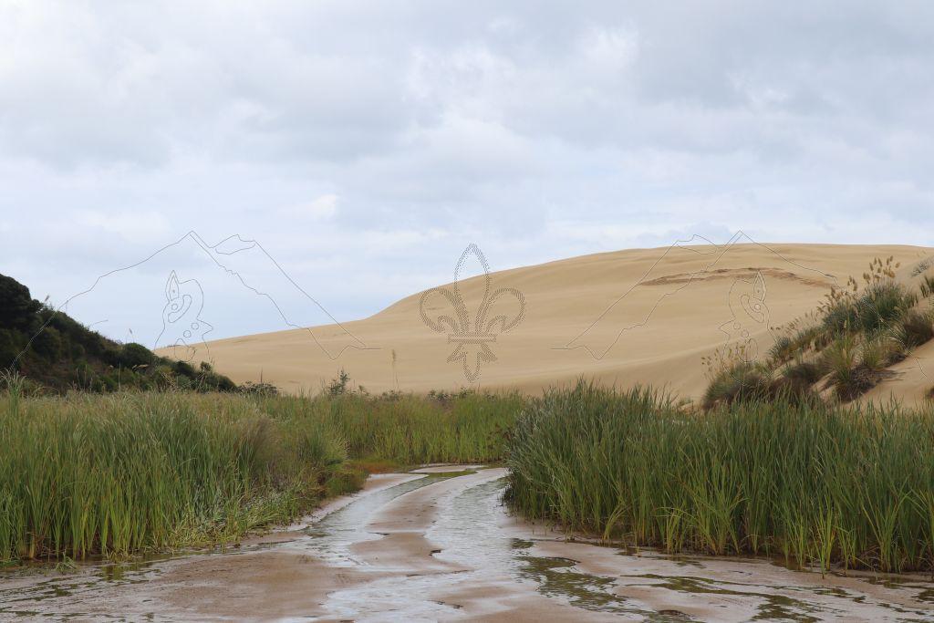 Die Sanddünen am Te Paki