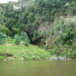 Das Grün des Uferbewuchses wird orange gesprenkelt durch die blühenden Montbretien.