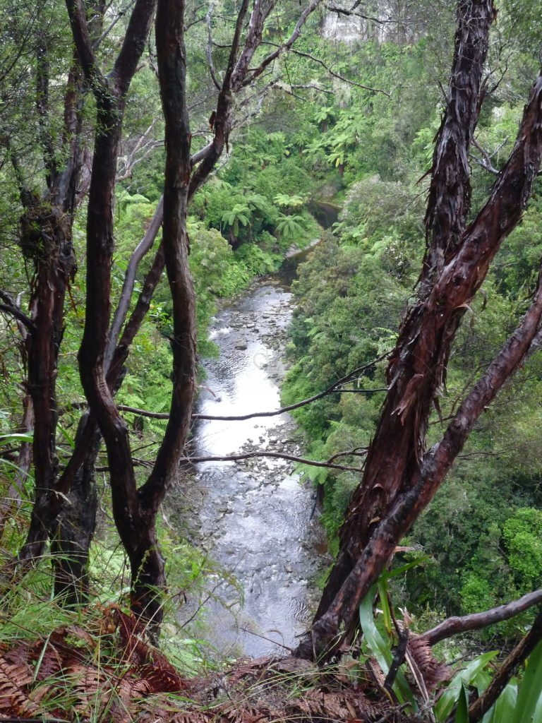 Der Regenwald erobert Hänge und Ufer des Mangapurua.