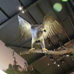 Der ausgestorbene Haast-Adler in den Ausstellungsräumen des Parks.