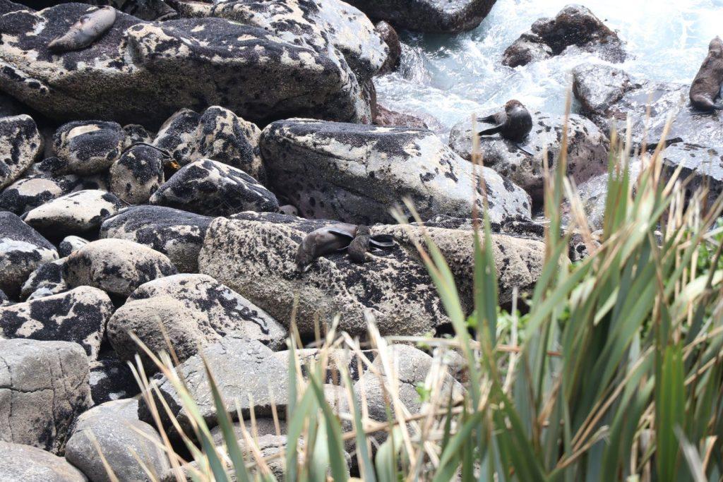 Mutter mit Kind in der Robbenkolonie Tauranga Bay.